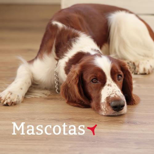 Seguro para Mascotas - JCastillo Baza Granada